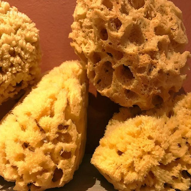 For every great soap bar, you need a great #AllNatural sea sponge. These sponges absorb our soaps perfectly, making them lather even more while offering gentle and comforting #Exfoliation. It's the best way to keep your skin fresh and renewed, without using other alternatives that typically leave your skin feeling rubbed and raw. Mother Nature is always best! 😉 #SeaSponges #MotherNature #RealSoap