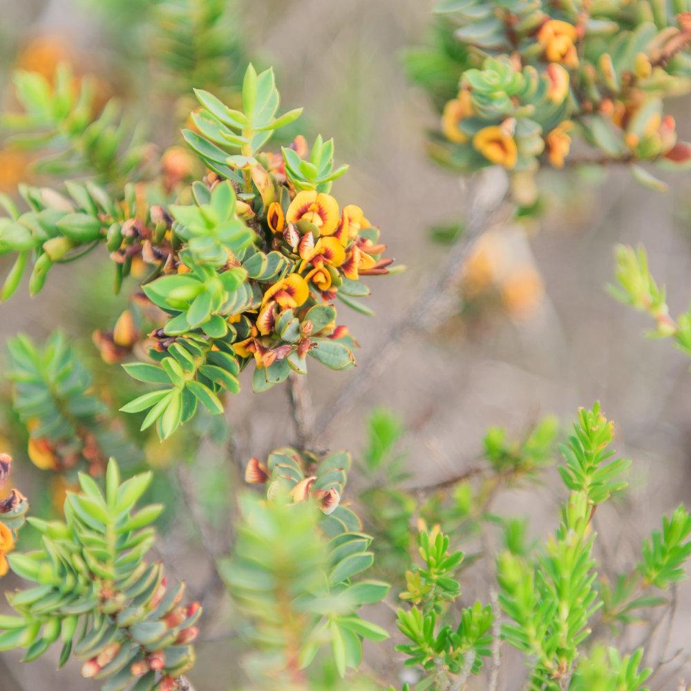 poisonous plant