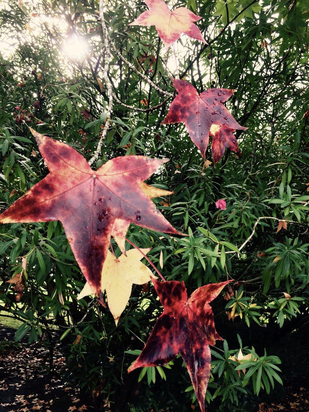 fall leaves.jpeg