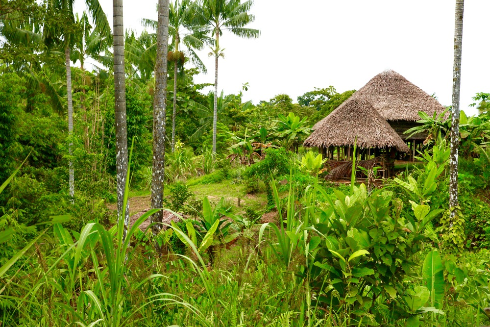 Kosua Bush Houses
