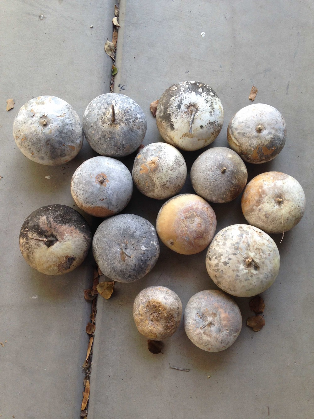 Step 1: Gather gourds