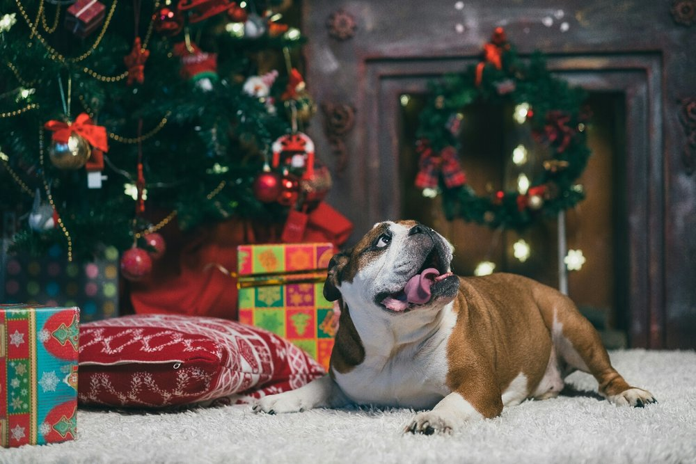 We already have bookings for Christmas 2017, it's never too early to arrange your pet care.