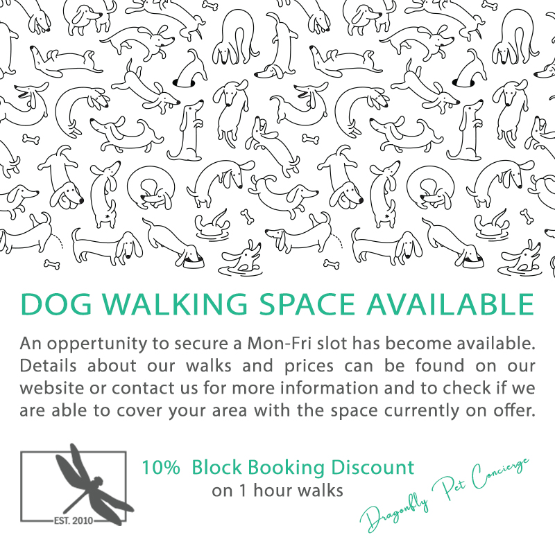 Dragonfly Pet Concierge Dog Walking