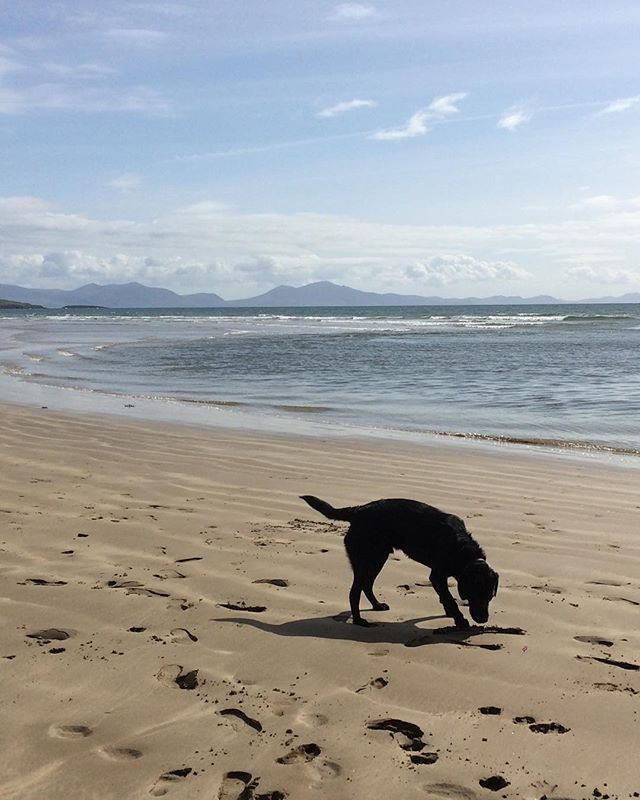 Angelsey at Easter with Snowdonia in background... a day throwing sticks for our faithful hound - such places inspire! Happy Easter
