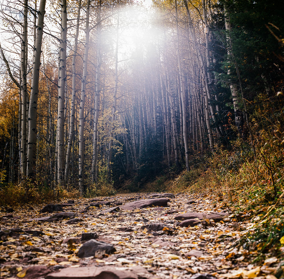 Bear Creek trail, Telluride, CO. Hasselblad 500 w/ 80mm lens. Kodak Ektar 100.