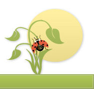 The Lost Lady Bug Project at Cornell University