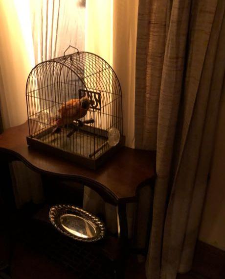 bird+cage.jpg