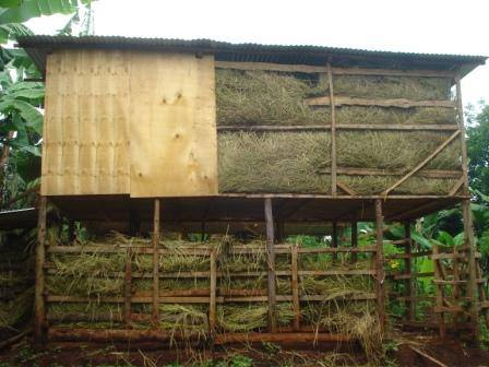 The new shed full of hay and ready for its new residents