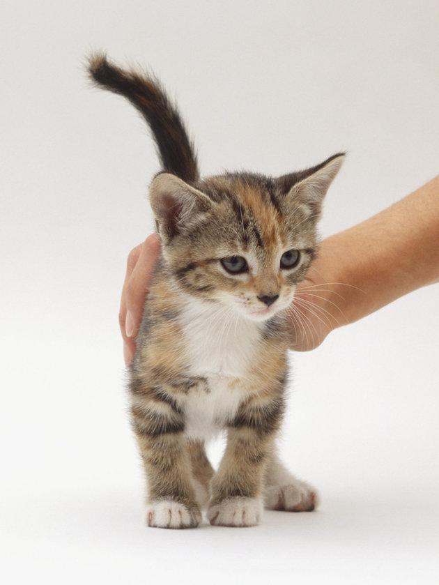 Cat pic.jpeg