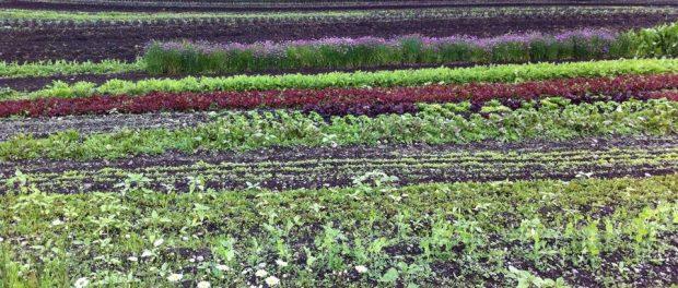 Farm to Food Workshops - AT ELM CITY WELLNESS