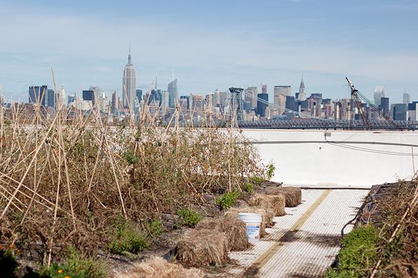 Brooklyn-Grange15.jpg