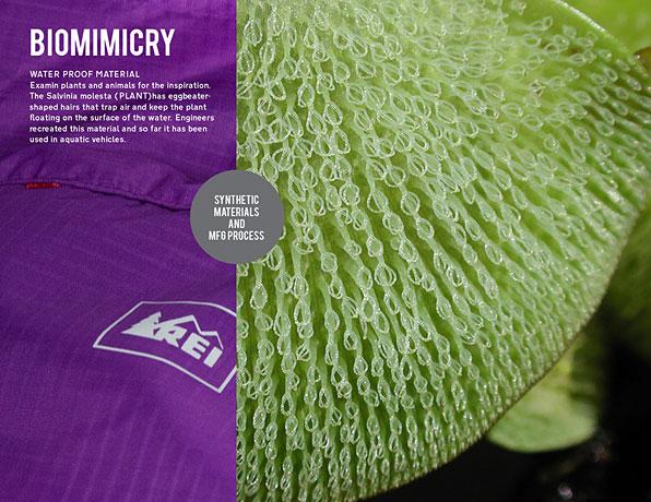 6_Biomimicry_blog