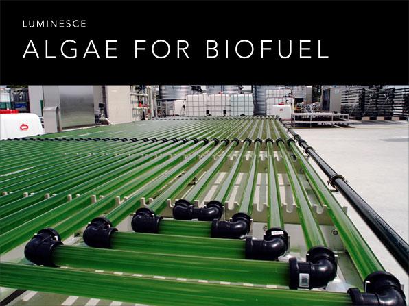 Weissgold.biofuel