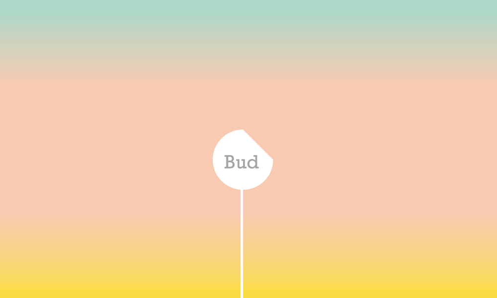 Bud-Identity