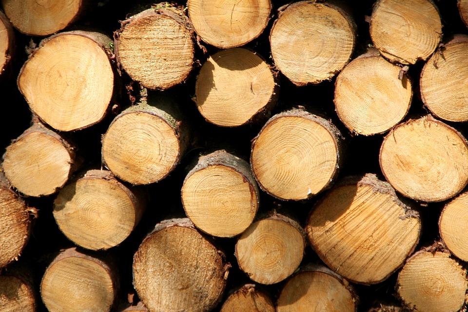 wood-trunks-1405527_960_720.jpg