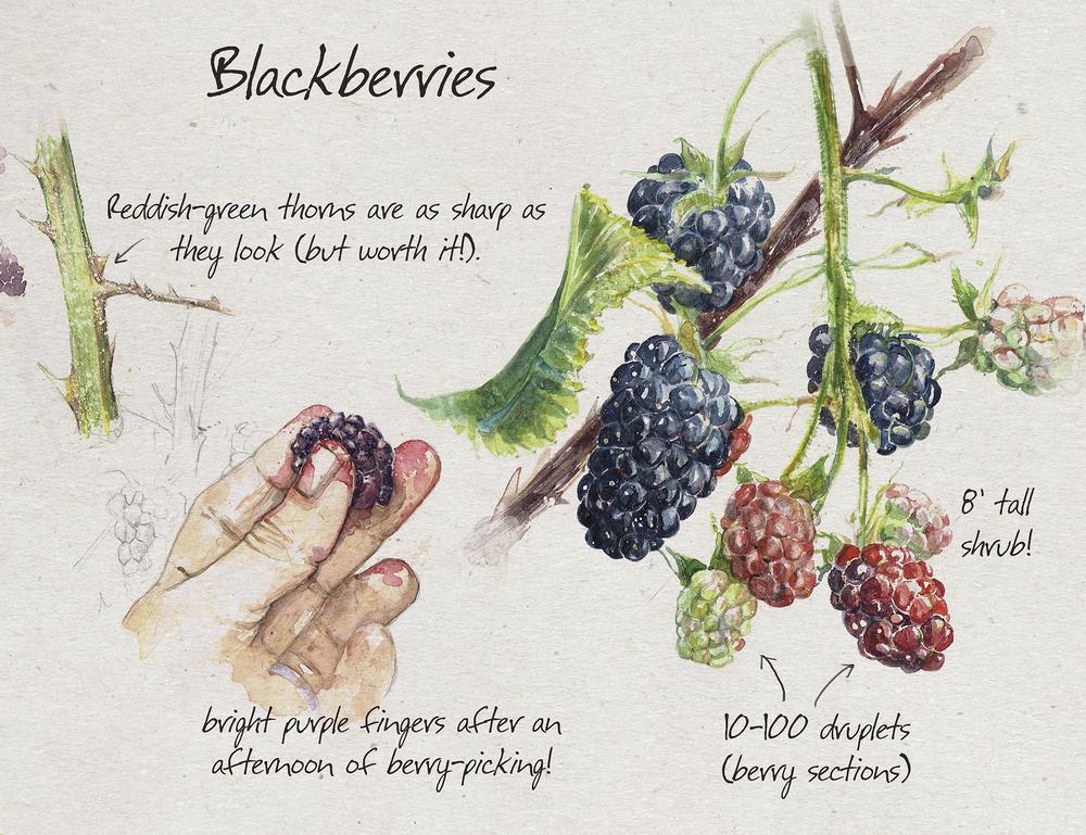 Blackberrry_sm.jpg