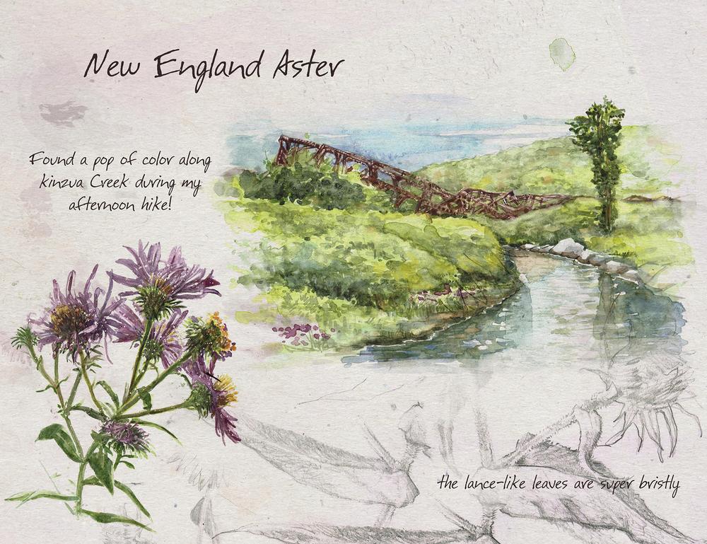 New_England_Aster_sm.jpg