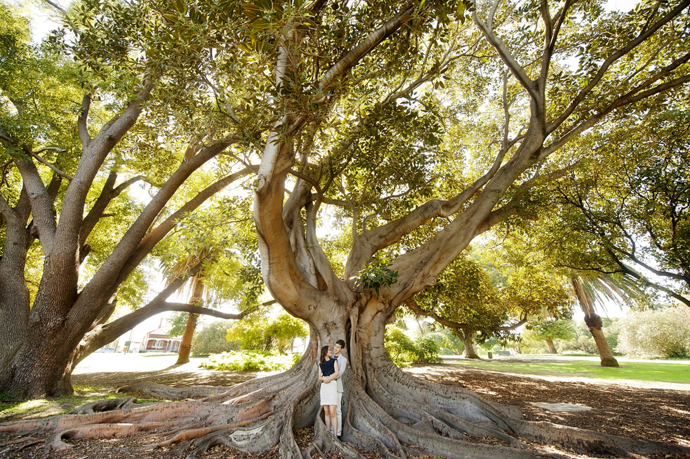 engagement photo with moreton bay fig tree perth hyde park