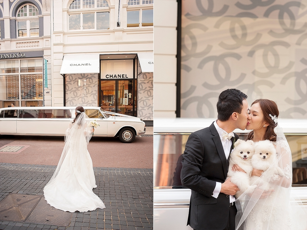 white fluffy dogs in wedding photos perth