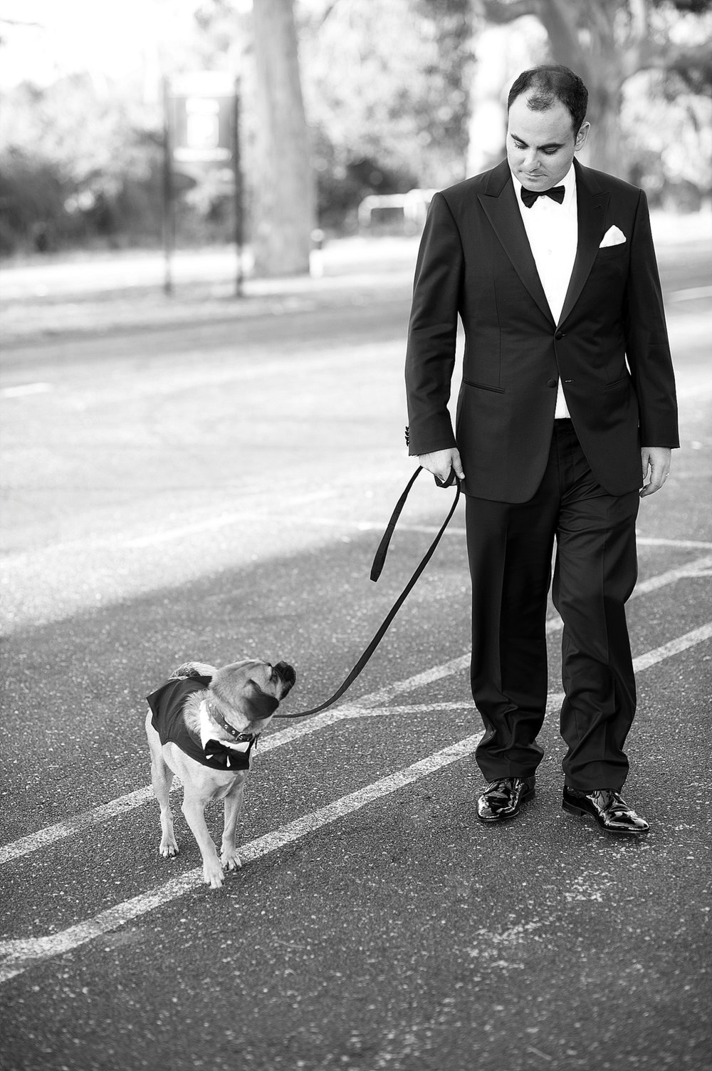 55_pugs with groom wedding perth.jpg