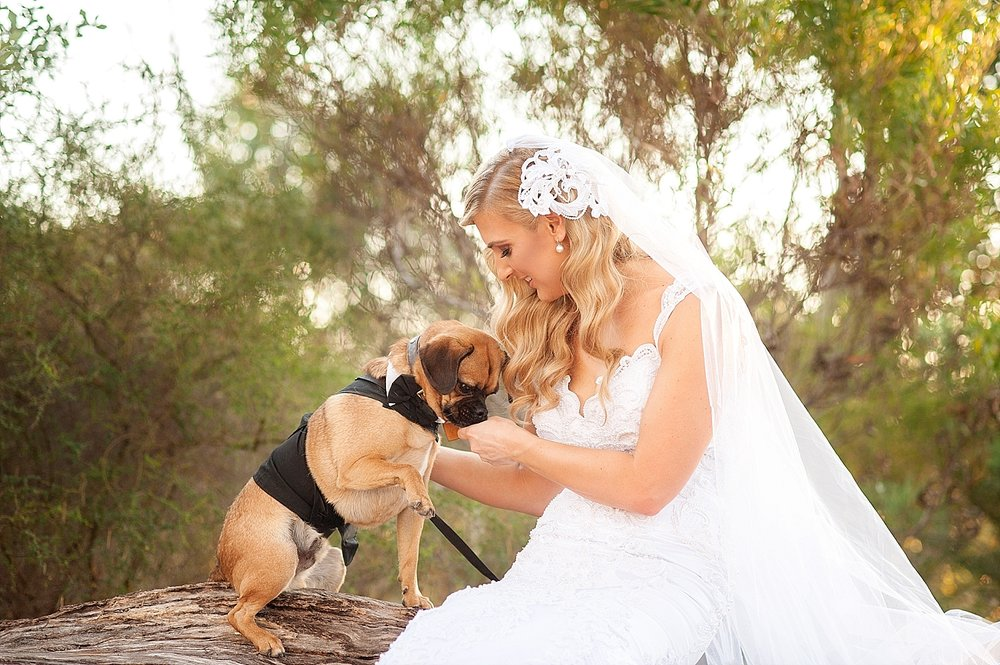56_bride with pug dog in kings park wedding perth.jpg