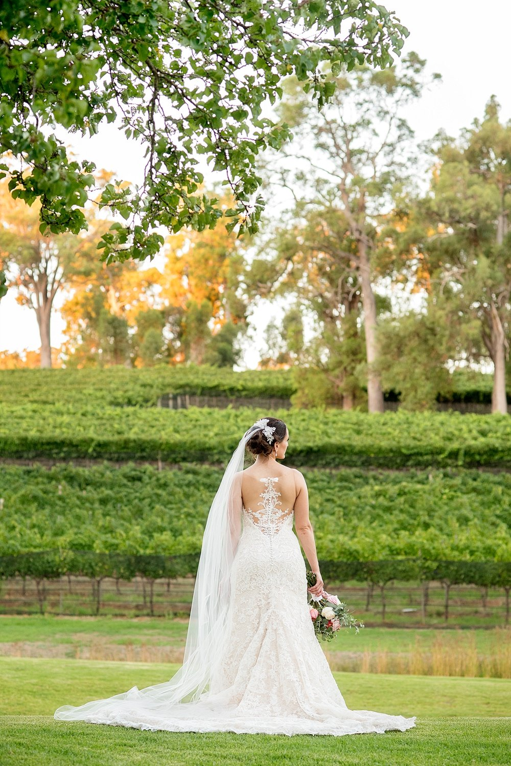 64_millbrook winery wedding perth bride in vineyard .jpg