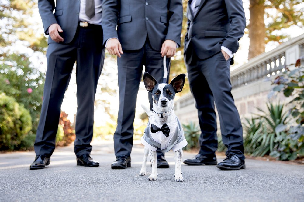 18_dog as ring bearer wedding perth.jpg