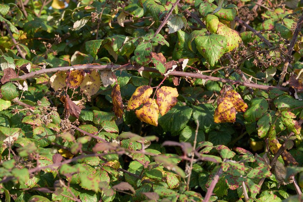 Leaves on bush