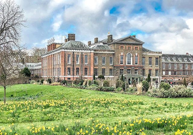 If you wander around Kensington Palace in Spring, you might just find a host of golden daffodils.  Photo: @ys_photoworld