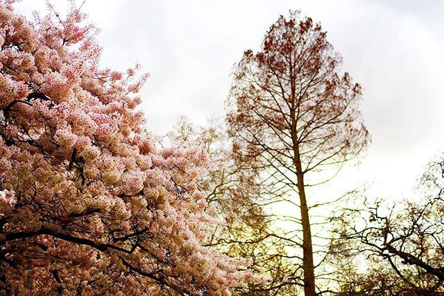 As if like magic, cherry blossom season has arrived in London and we couldn't be happier.  If you're heading for a stroll through St James' Park to see the beautiful colours, why not finish with a refreshing craft beer in our cosy bar?  Photo: @joelleandchoux