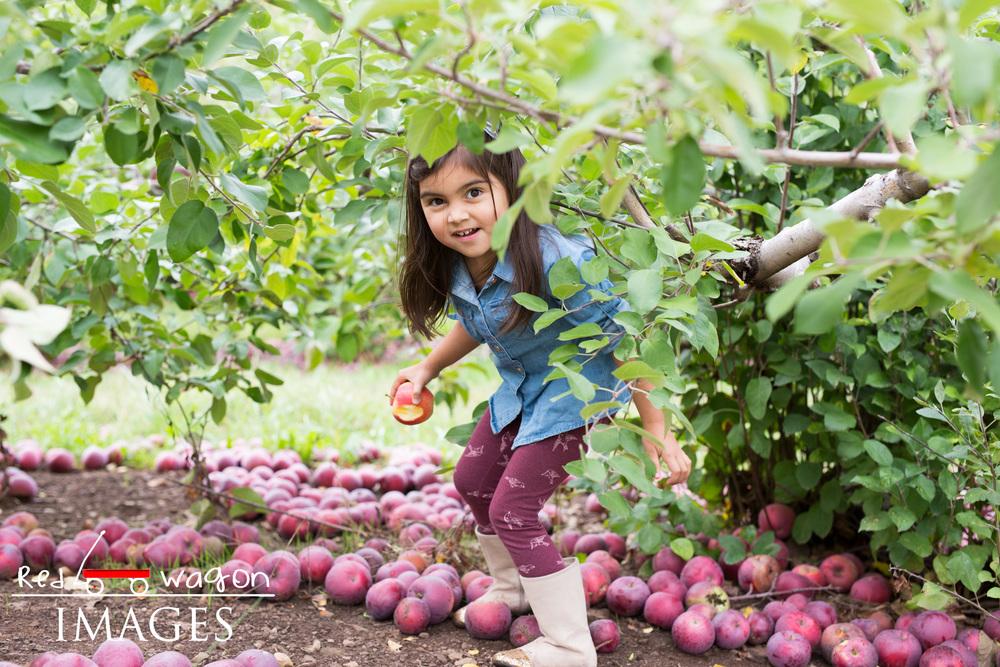 family-photography-lyman-orchard-11