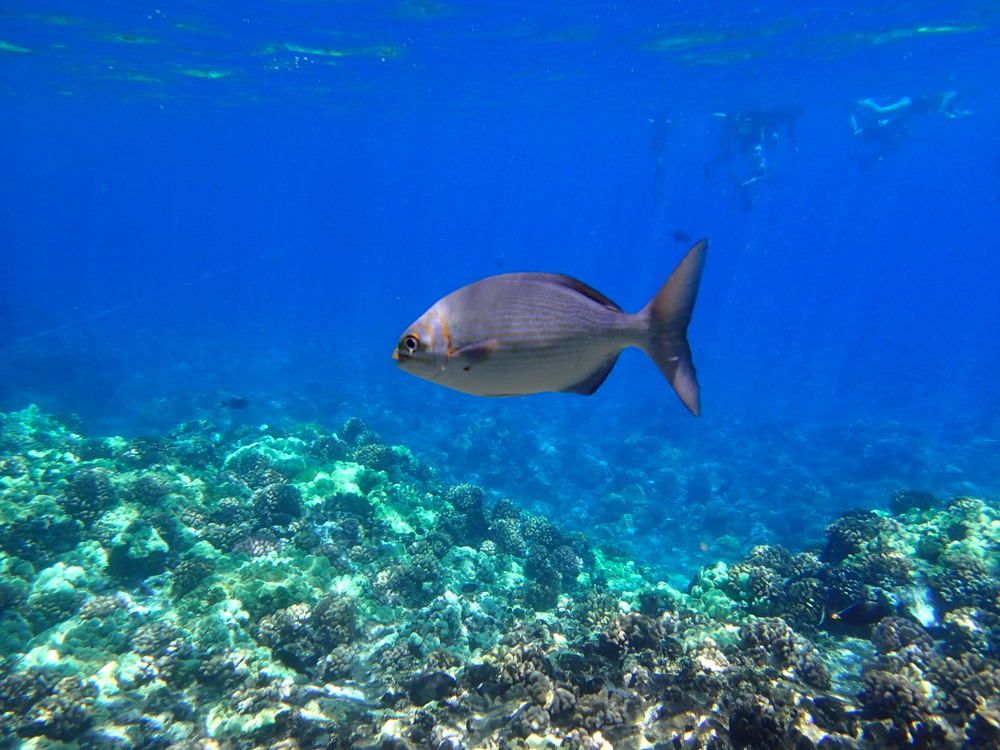 Spotting Fish in the Molokini Crater, Maui