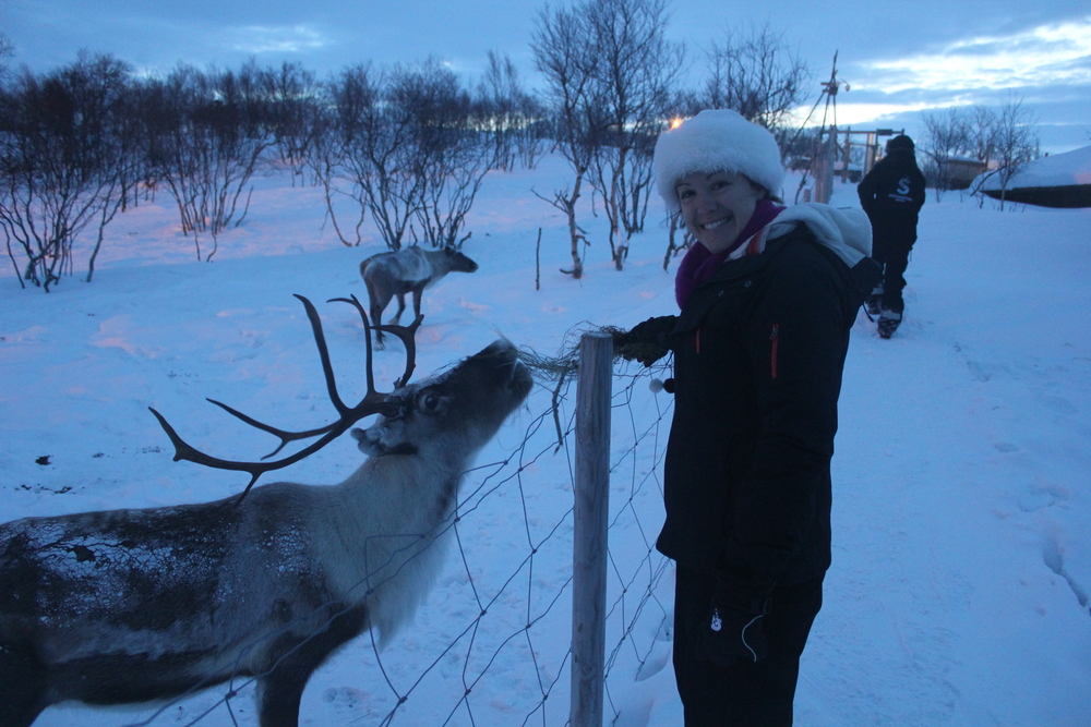 Feeding the hungry at the Gabba Reindeer Park , Norway