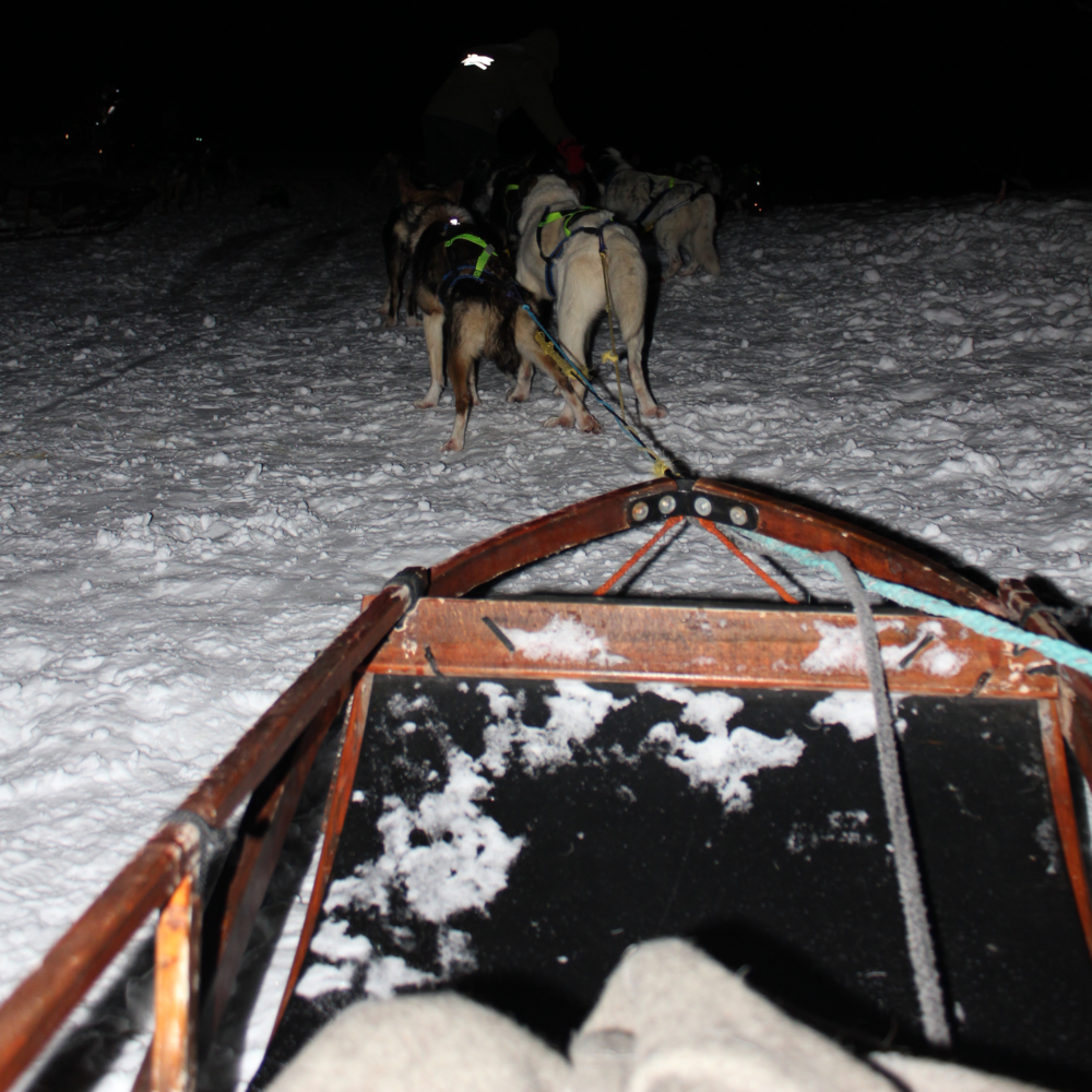 Dog Sledding Adventure, Tromsø Norway