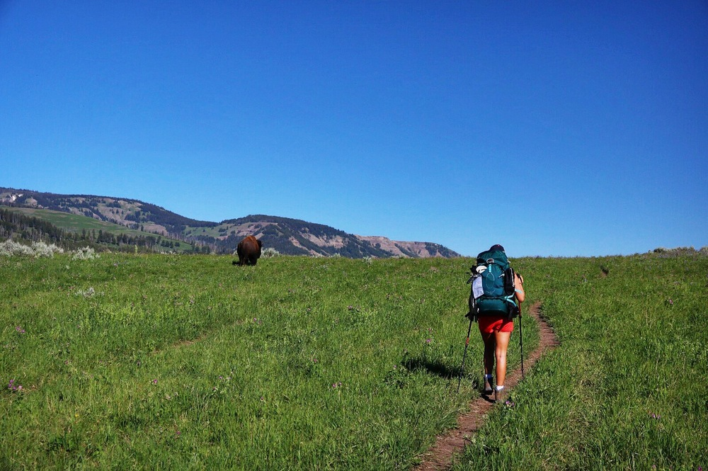Walking with the Bison in the backcountry - Yellowstone National Park