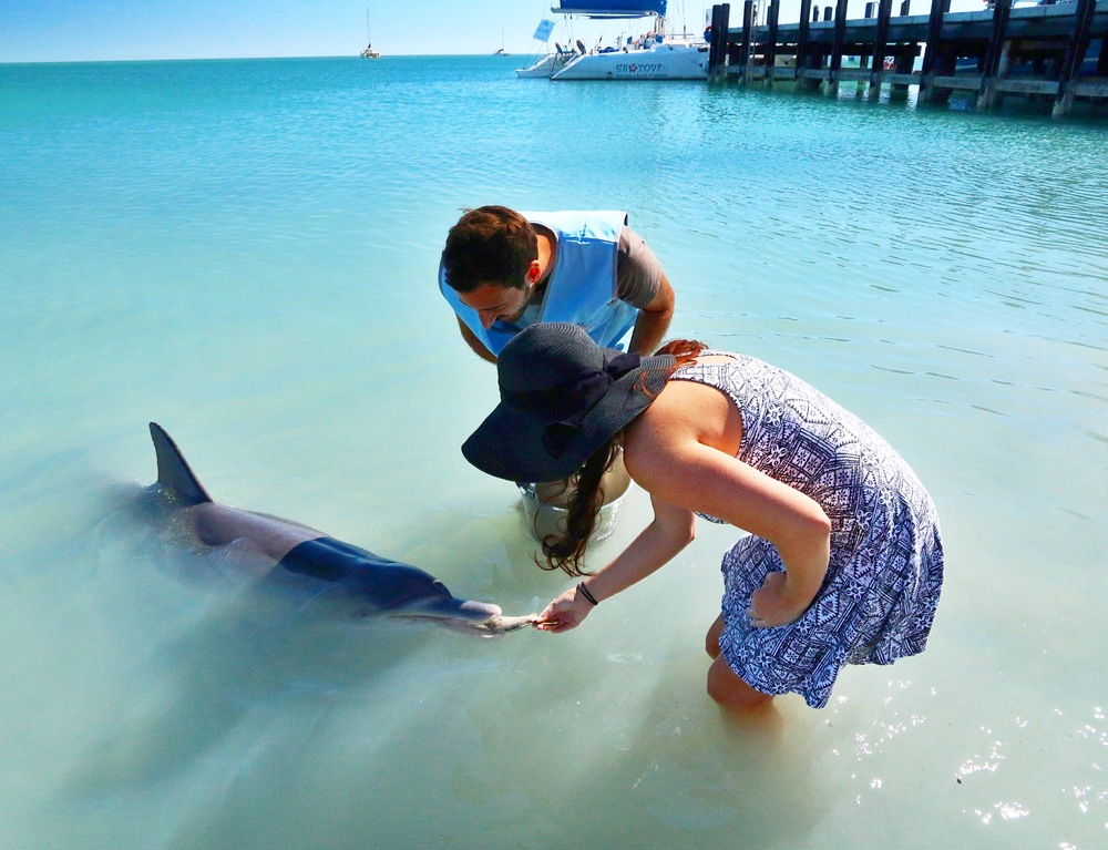 Feeding the resident Dolphins in Monkey Mia - Western Australia