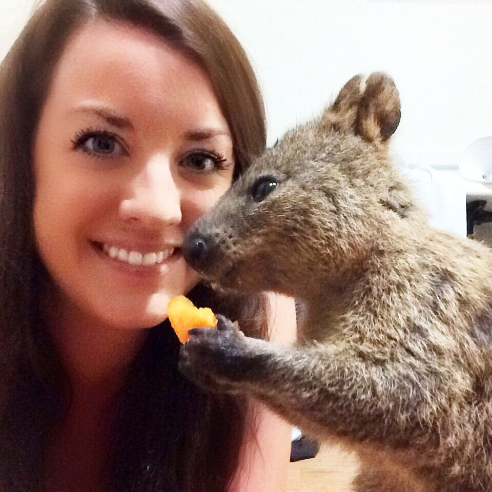 Friendly Quokka who broke into my room and stole my Cheezels!