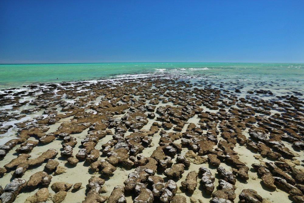 Stromatolites,Shark-Bay -Western Australia