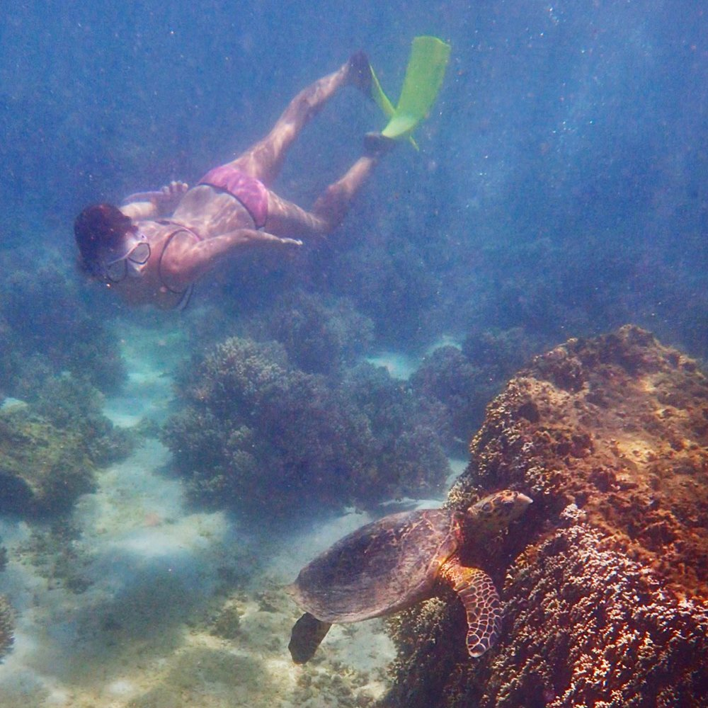 Snorkeling with the sea turtles - Western Australia