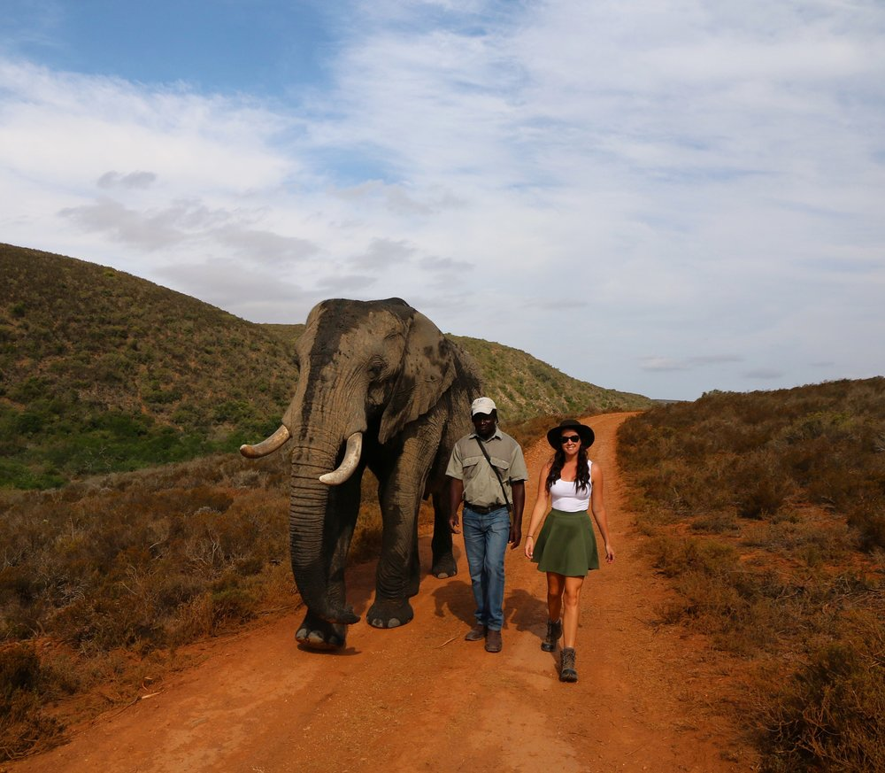 Walking with the gentle giants at Indalu - South Africa
