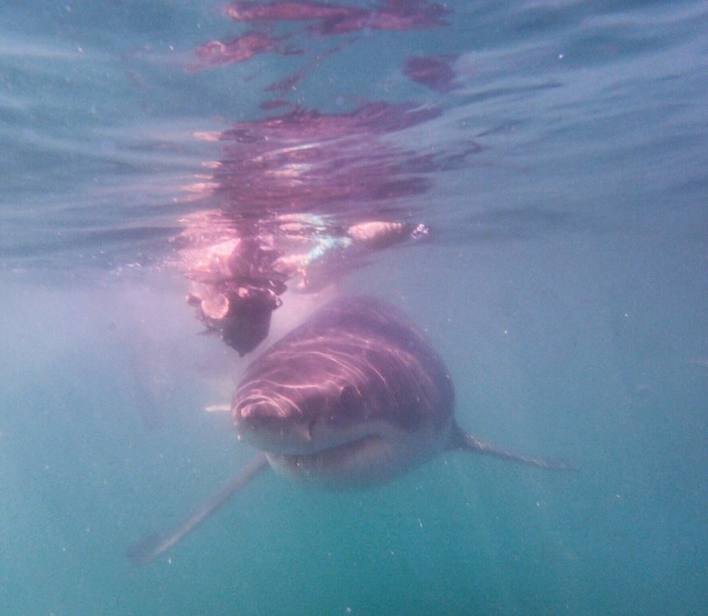 Cage Diving with the Great White Sharks - South Africa