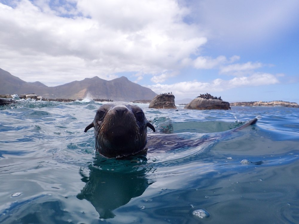 Swimming with the Seals in Cape Town - South Africa