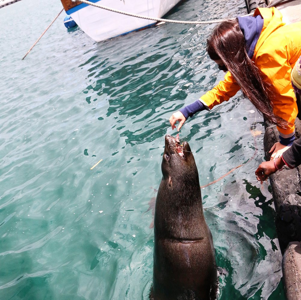 Feeding the seals - Cape Town - South Africa
