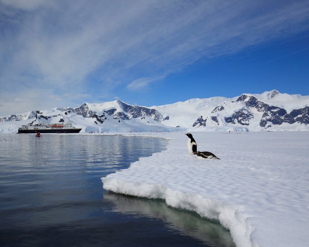 Penguins on the fast ice - Antarctica