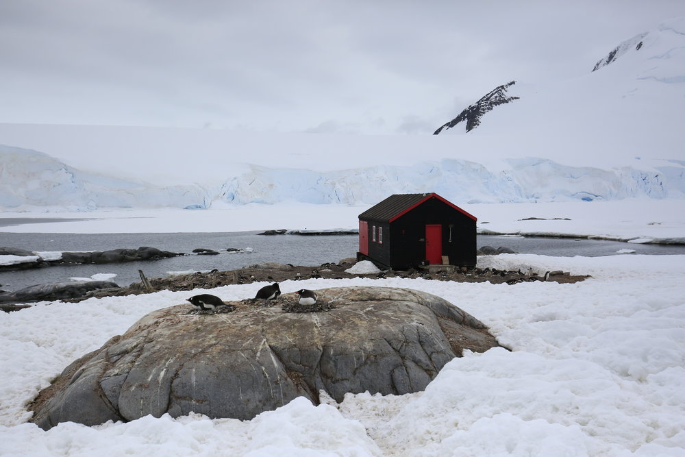 Port Lockroy - Antarctica