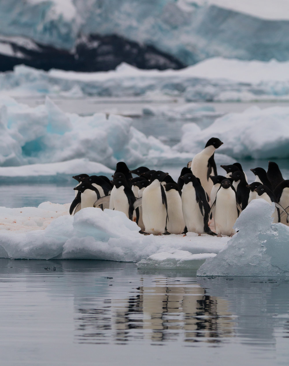 Penguins on an iceberg - Antarctica