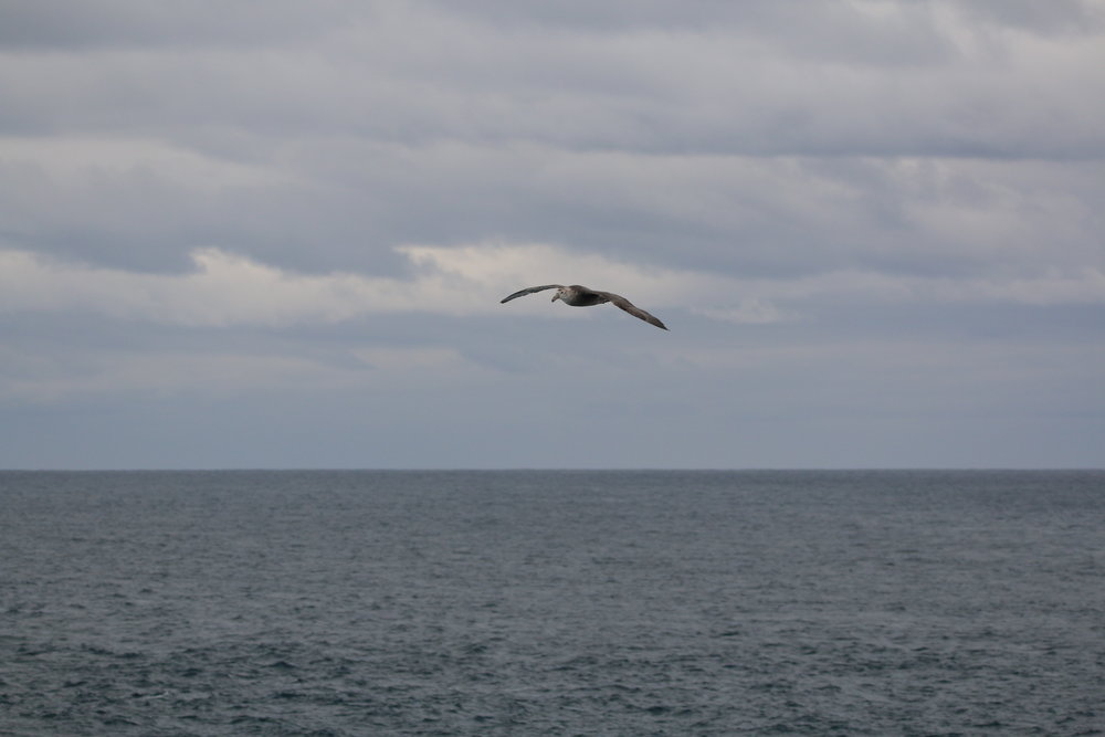Bird Watching at sea