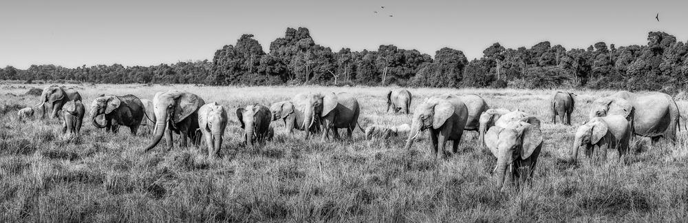 wildlife-4.jpg