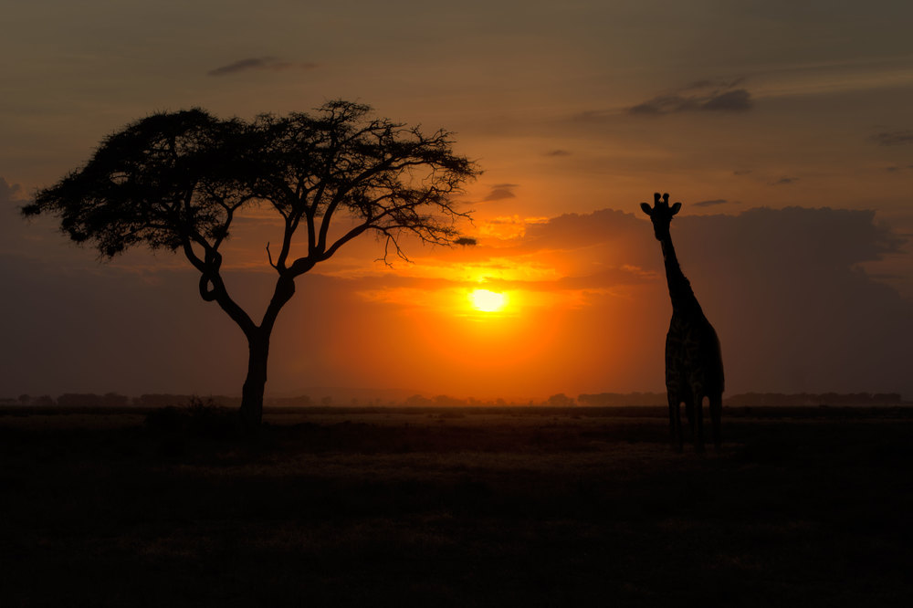 Tree-sunset-giraffe-v3.jpg