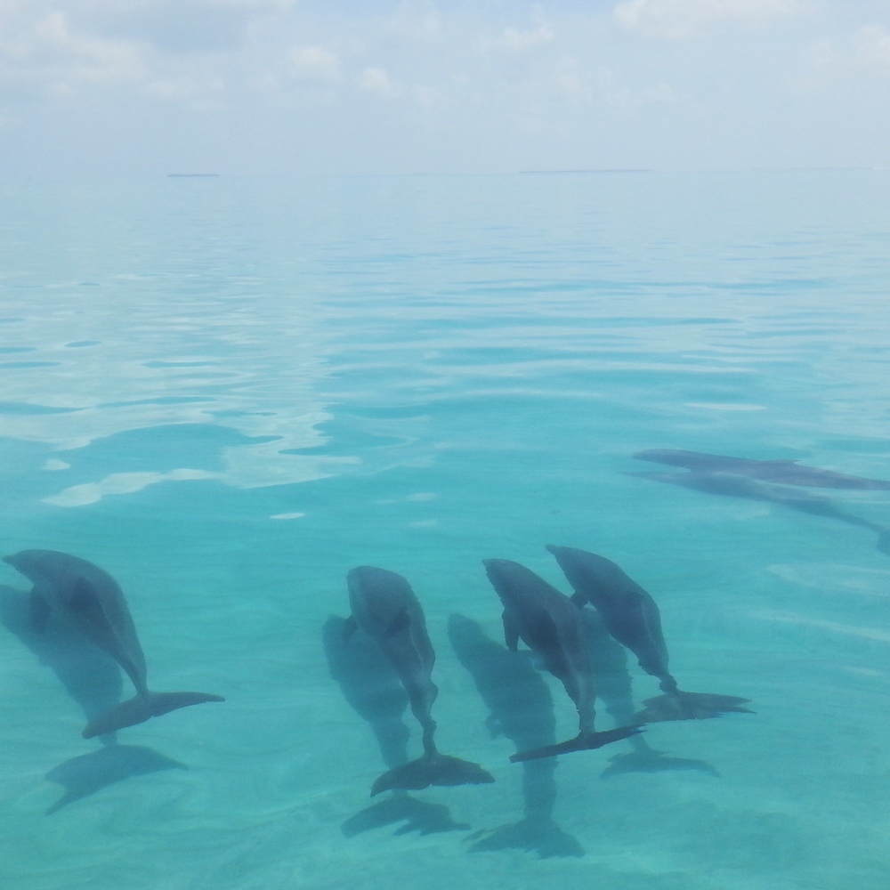 five dolphins.jpg